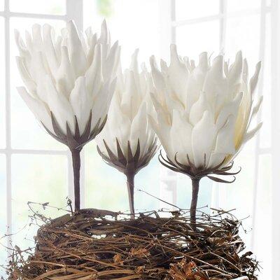 PureDay Kunstpflanze Wüstenblume Amari