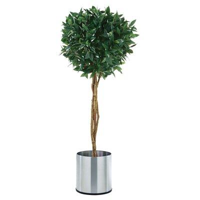 PureDay Kunstpflanze Lorbeerbaum