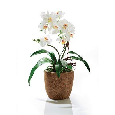 PureDay Kunstpflanze Orchidee Rusty