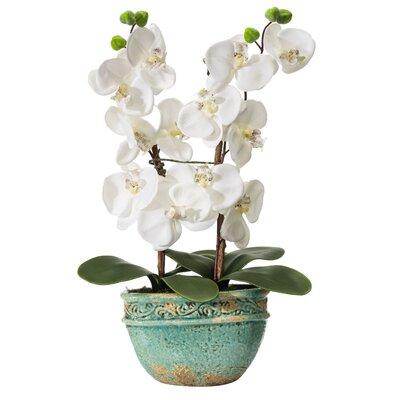 PureDay Kunstpflanze Orchidee