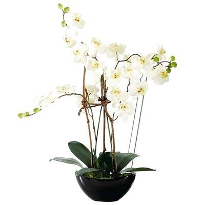 PureDay Kunstpflanze Orchideentopf