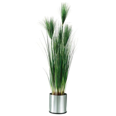 PureDay Kunstpflanze Papyrus