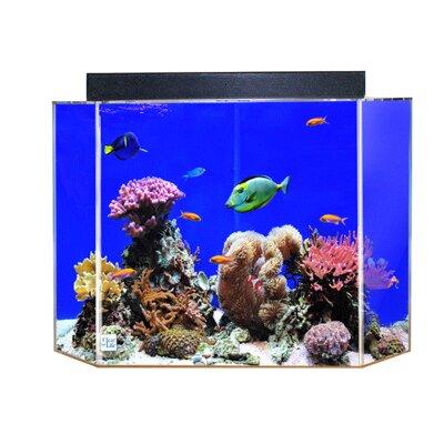 """Aquarium Tank Color: Black Back, Size: 24"""" H x 36"""" W x 18"""" D"""