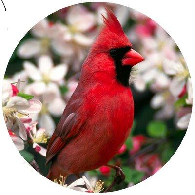 Custom Cardinal Jar Opener