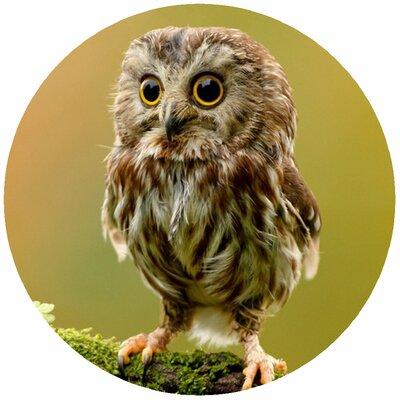 Custom Owl Jar Opener