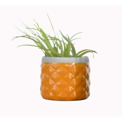 Backes Ceramic Pot Planter Color: Ginger