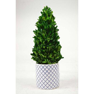 Tower Desktop Boxwood Topiary in Planter
