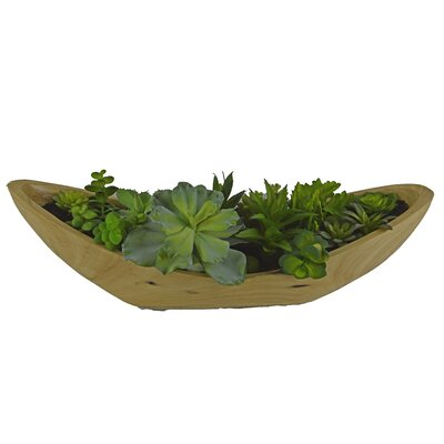 Desktop Succulent Plant in Wooden Pot