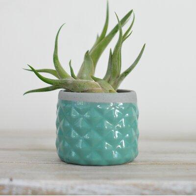 Backes Ceramic Pot Planter Color: Seafoam