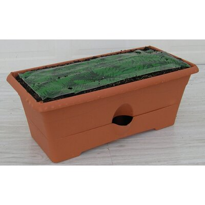 Ceramic Planter Box (Set of 6) Color: Terra Cotta