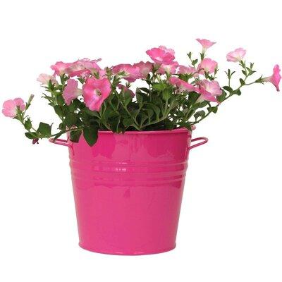 Galvanized Steel Pot Planter Color: Hot Pink