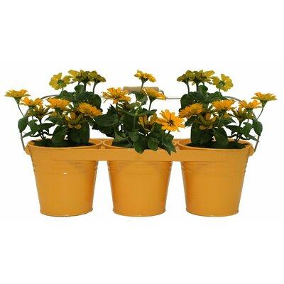 Galvanized Steel Pot Planter Color: Saffron