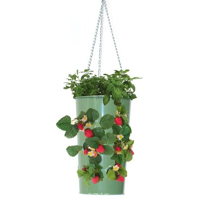 Galvanized Steel Hanging Planter Color: Sage