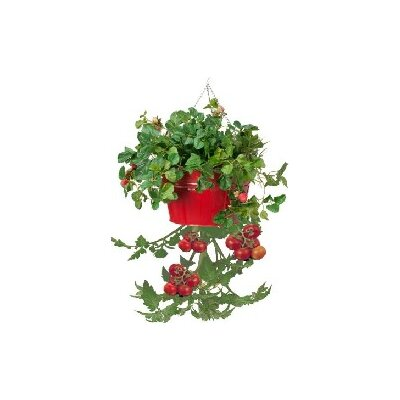 Galvanized Steel Hanging Planter Color: Red
