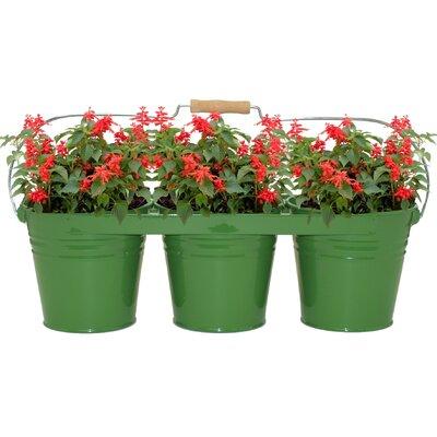 Galvanized Steel Pot Planter Color: Sage