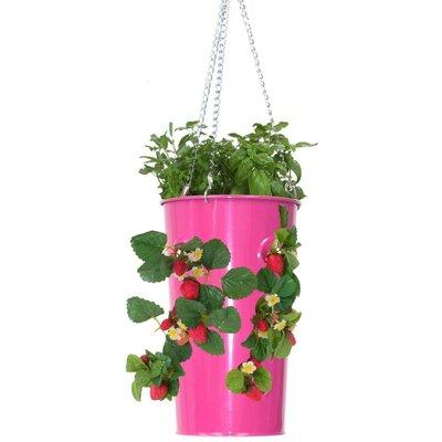 Galvanized Steel Hanging Planter Color: Hot Pink