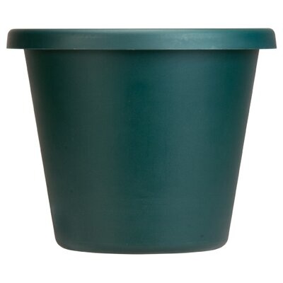 Pot Planter (Set of 24) Size: 6'' H x 9'' W, Color: Evergreen