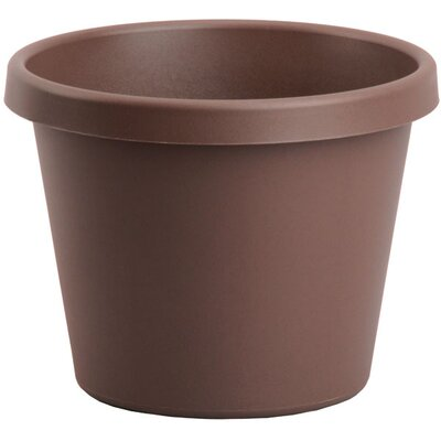 Pot Planter (Set of 24) Size: 6'' H x 9'' W, Color: Chocolate