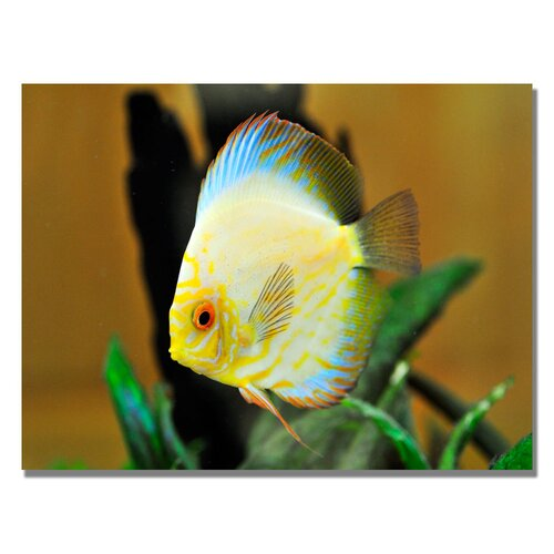 'Tropical Fish' by Kurt Shaffer Photographic Print on Canvas