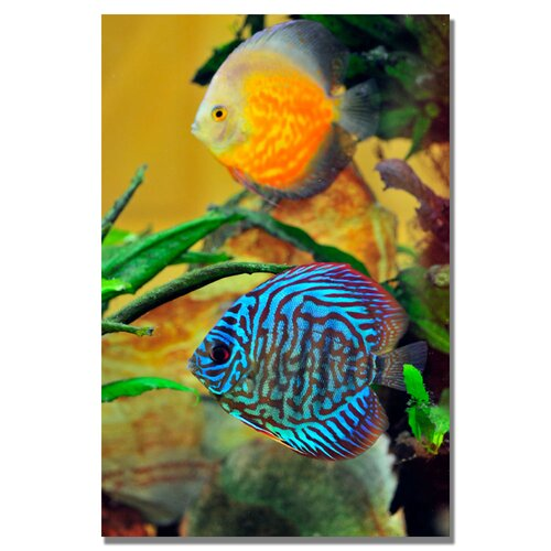 'Two Tropical Fish' by Kurt Shaffer Photographic Print on Canvas