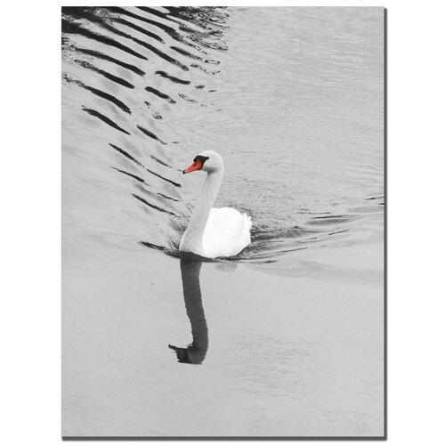 'Swan' by Patty Tuggle Photographic Print on Canvas