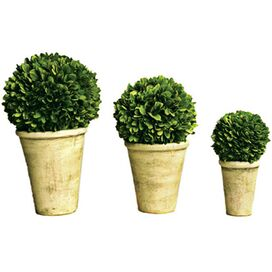 3 Piece Preserved Boxwood Set