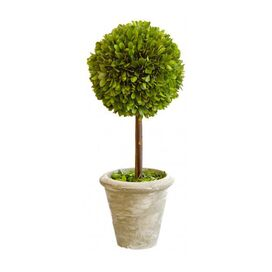 "Preserved Boxwood 16"" Ball Topiary"