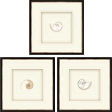Pearled Nautilus 3 Piece Framed Graphic Art Set (Set of 3)