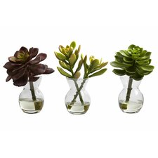 Succulent Arrangements Desk Top Plant in Decorative Vase (Set of 3)
