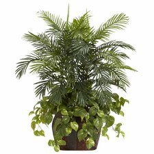Double Areca Pothos Plant in Decorative Vase
