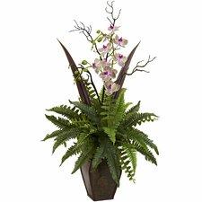 Fern and Orchid Arrangement