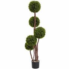 Boxwood Topiary in Pot