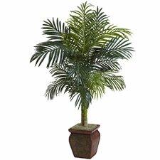 Golden Cane Palm in Decorative Vase