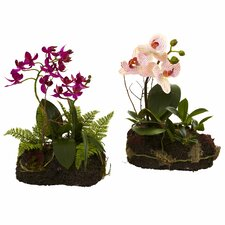 2 Piece Orchid Island Set