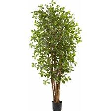 Olive Silk Tree in Pot