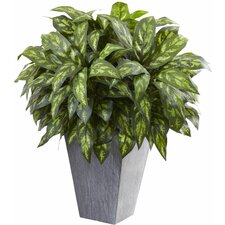 Silver King Floor Plant with Slate Planter
