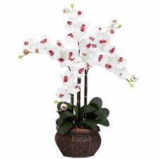 Phalaenopsis with Decorative Vase Silk Flower Arrangement in White