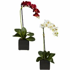 Phalaenopsis Orchid with Black Vase Silk Flowers (Set of 2)