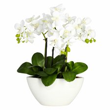 Lorelei Phalaenopsis Silk Flowers in Pot