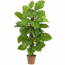 Leaf Philodendron Tree in Pot