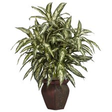 Aglonema Desk Top Plant with Decorative Vase