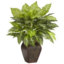 Dieffenbachia Desk Top Plant in Decorative Vase