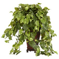 Vining Pothos Floor Plant in Decorative Vase
