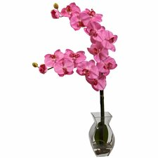 Phalaenopsis Orchid with Vase