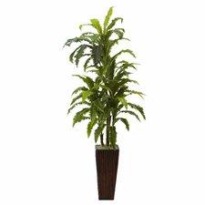 Margarintum Tree in Planter