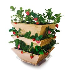 Homegrown Gourmet Garden Strawberry Patch Tower