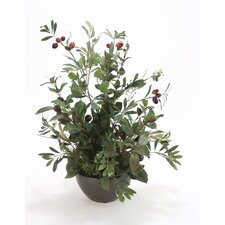 Silk Olive Tree in Bowl