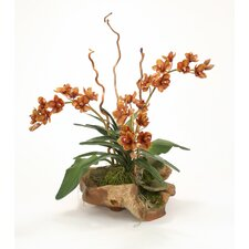 Silk Orchids with Tropical Foliage in Faux Teak Wood Basin