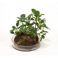 Silk Small Ficus Bonzai Tree Garden Floor Plant in Planter