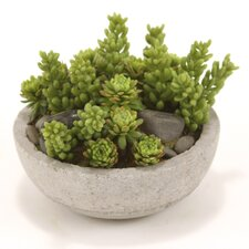 Faux Mixed Succulents and Stones Floor Plant in Pot (Set of 4)